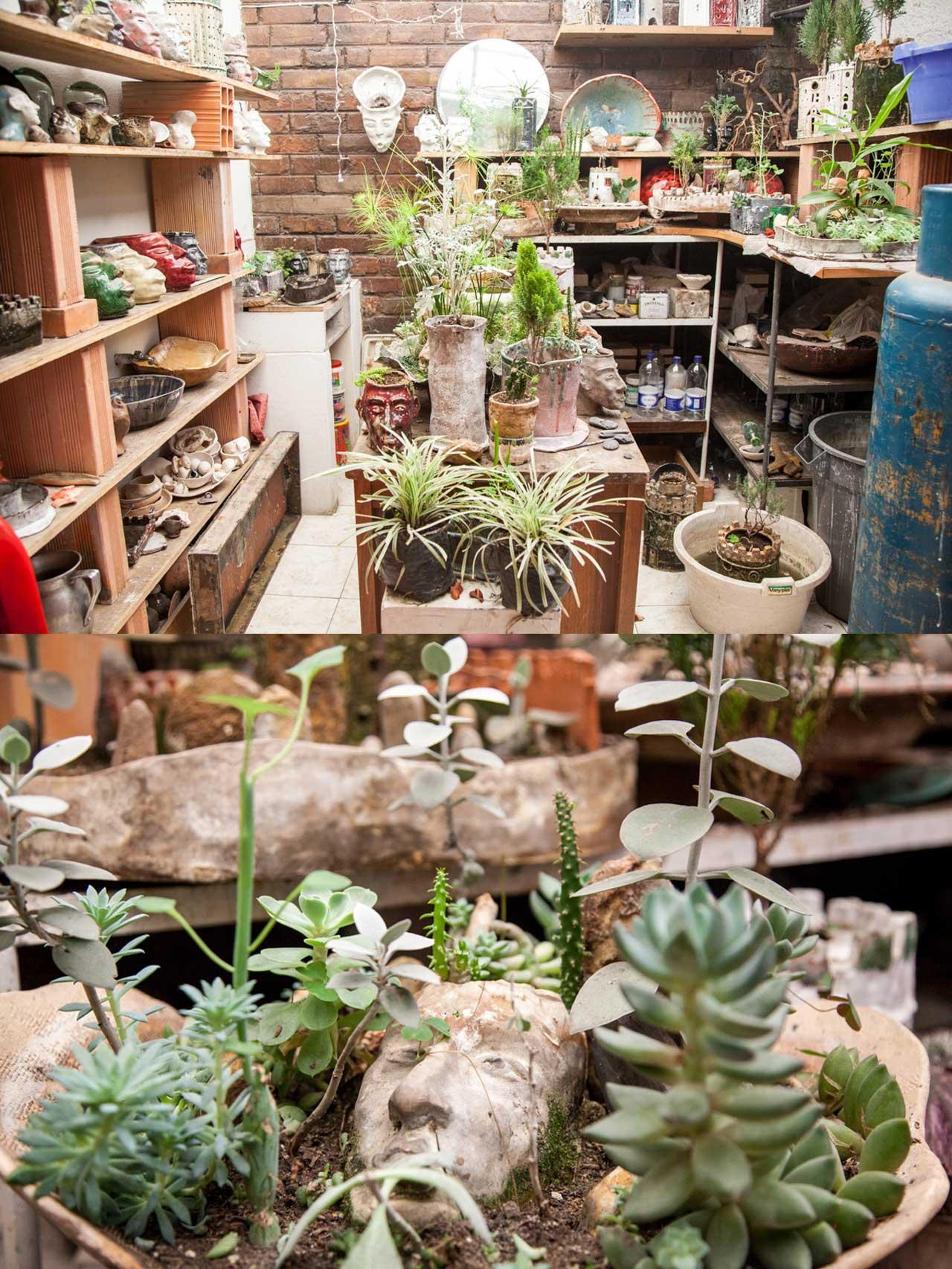 gabriel-silva-plantas.jpg