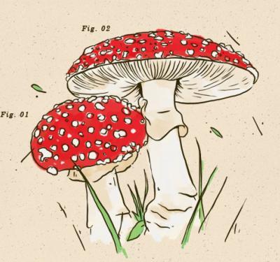 hongos alucinógenos, medicinales y comestibles