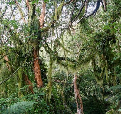 Amazonas, África, Isla Borneo.