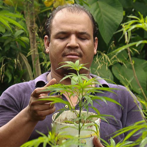 cientificos cannabicos colombia