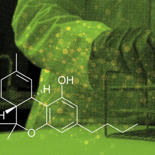 marihuana Mango Biche Colombiana