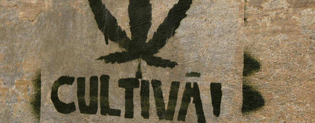 Ruta del Cannabis Cartel Urbano