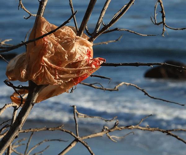 Martes de cine consciente, reflexiones sobre el consumo y el medio ambiente