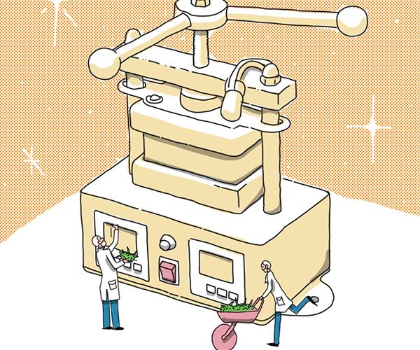 Entre extracciones de rosin y otros procesos naturales se mueve Chala2s, un emprendimiento cannábico boyacense