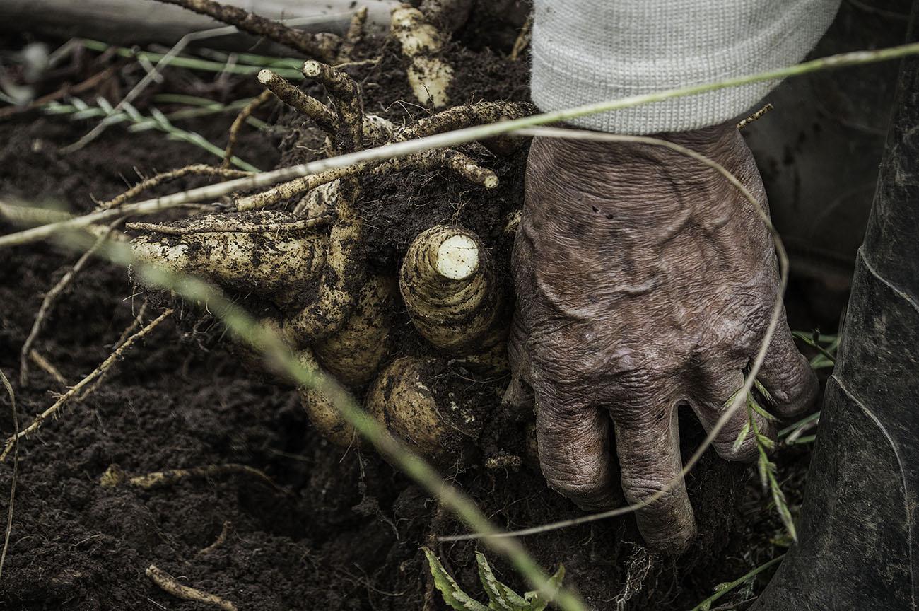 imagenes-de-manos-de-manuel-campensino-colombiano.jpg