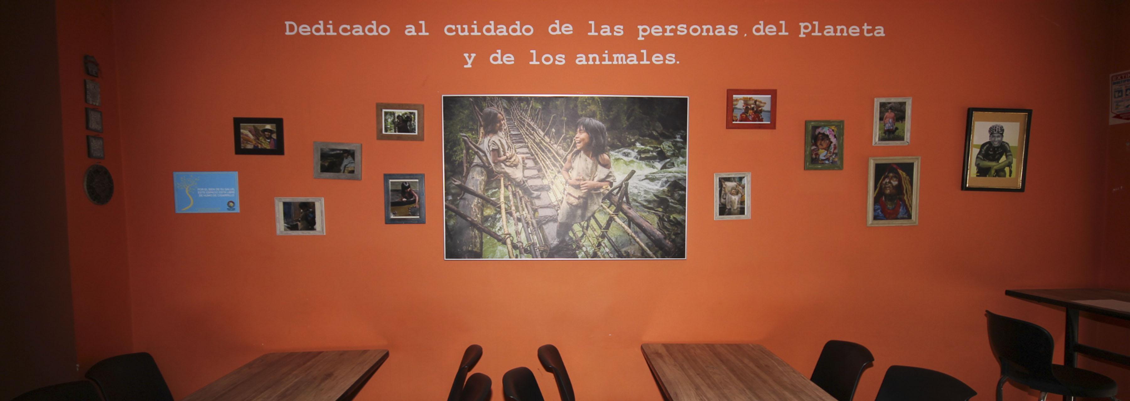 mestizo3.jpg