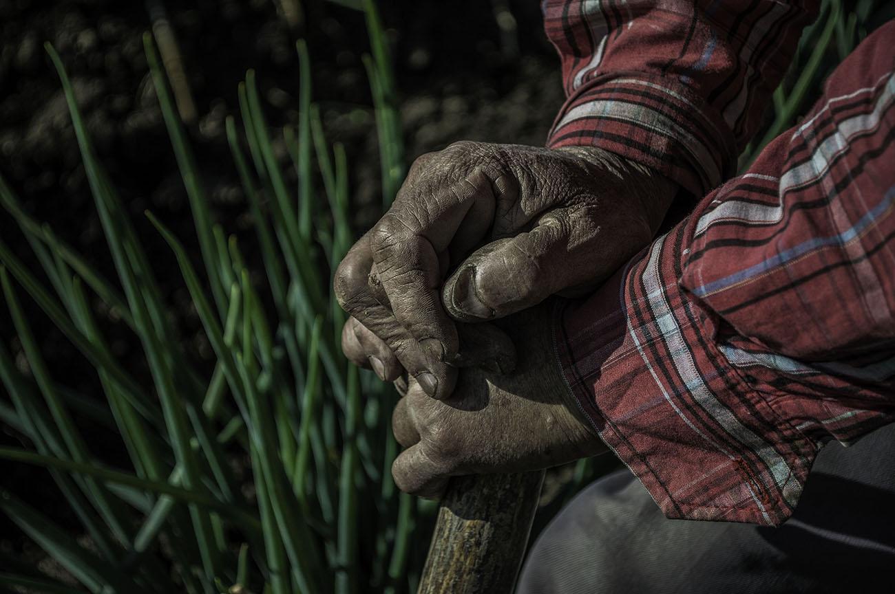 imagenes-de-manos-de-victor-campesino-colombiano.jpg