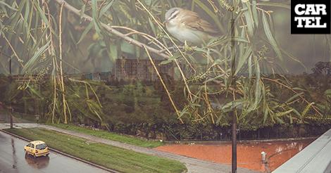 Sin gente rondando, los humedales en Bogotá respiran un nuevo aire