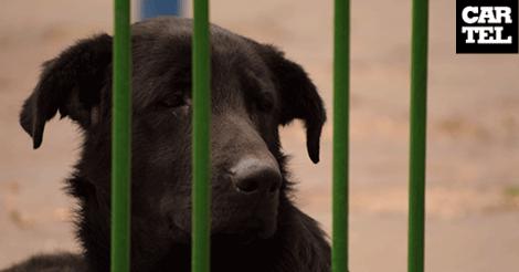 Animales callejeros, los otros afectados en la cuarentena