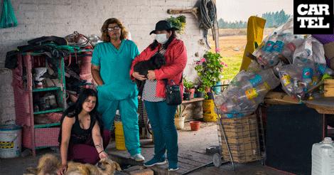 La labor de las proteccionistas de animales en Bosa