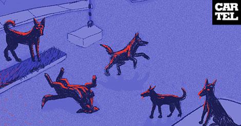 Perros ferales cartel urbano