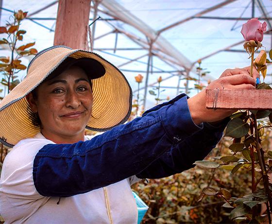 Flores en La Sabana: una mirada al oficio de las floristas